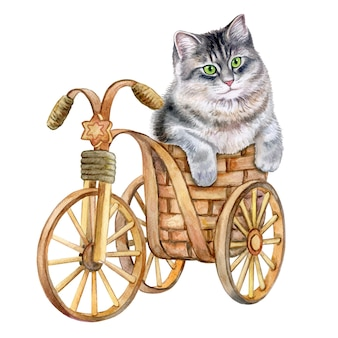 Милый кот в корзине котенок на декоративном велосипеде акварель