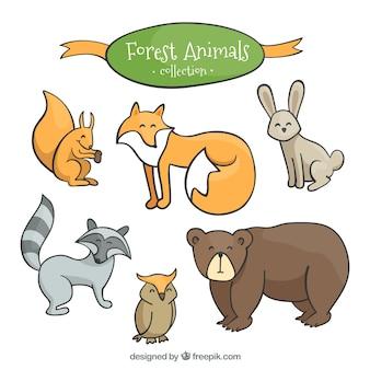 Animali belli della foresta