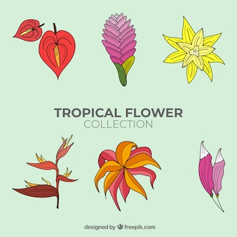 Lovely hand drawn tropical flower collection