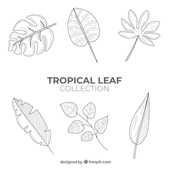 Lovely hand drawn tropical leaf collection