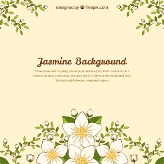 Lovely jasmine background with hand drawn style