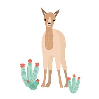 Lovely llama, cria or alpaca isolated on white