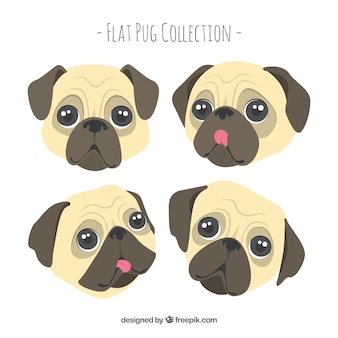 Lovely pack of cute pug faces