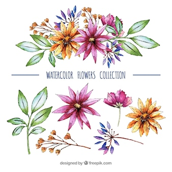 Lovely pack of watercolor floral elements