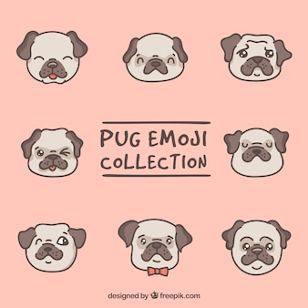 Lovely pack of pug faces