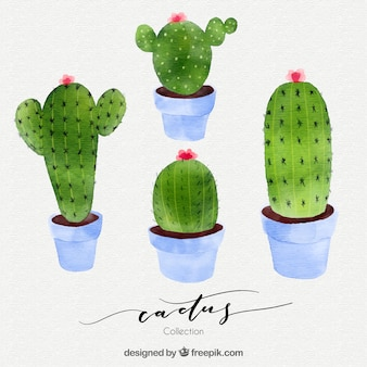 Lovely pack of watercolor cactus