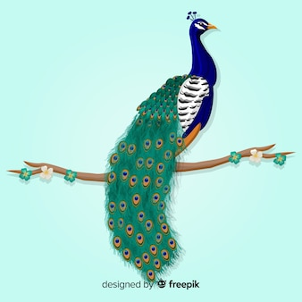 Lovely peacock background