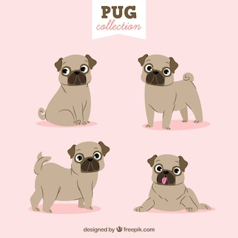 Lovely pug collection
