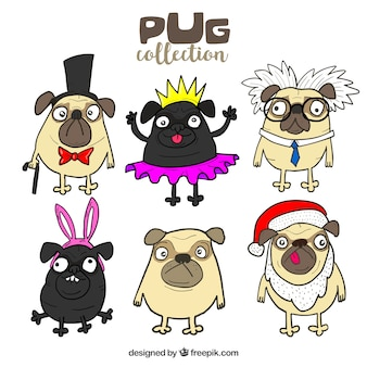 Lovely pugs with funny costumes