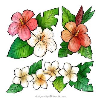 熱帯の花の水彩画の素敵なセット