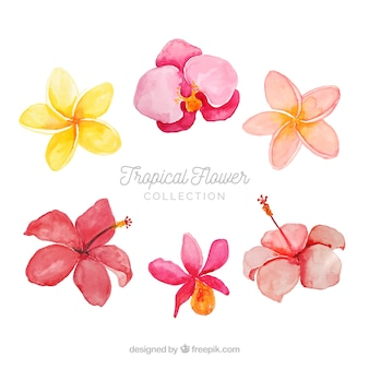 Bella serie di fiori tropicali ad acquerelli
