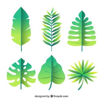Lovely tropical leaf collection with flat design