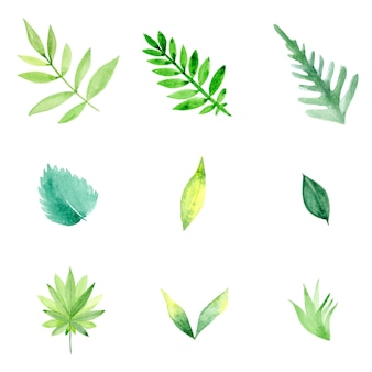 Lovely watercolor leafs