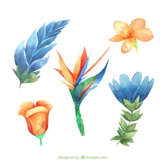 Lovely watercolor tropical flower collectio