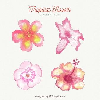 Bella collezione di fiori tropicali dell'acquerello