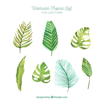 Lovely watercolor tropical leaf collection