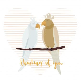 Loving couple of parrots