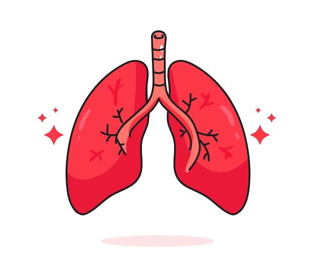 肺人体解剖生物学臓器体システムヘルスケアと医療手描き漫画アートイラスト