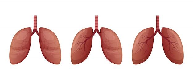白い背景の上の肺の図
