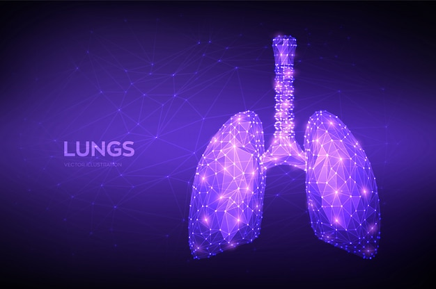 Lungs. low polygonal human respiratory system lungs anatomy. treatment of lung diseases.