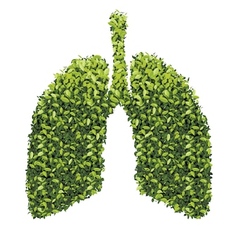 Lungs with green leaf