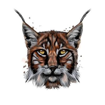 Lynx head portrait from a splash of watercolor