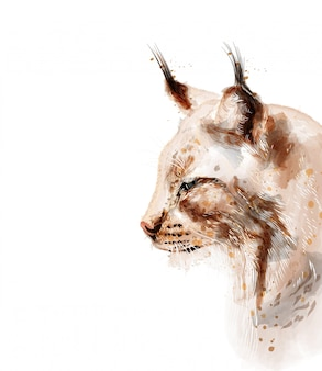 Lynx watercolor isolated