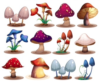 M	ushroom set