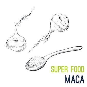 Maca root. super food hand drawn