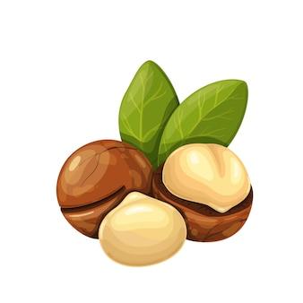 Орехи макадамия с листьями.
