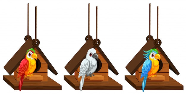 Macaw parrots living in birdhouse