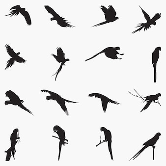 Macaw silhouettes illustration