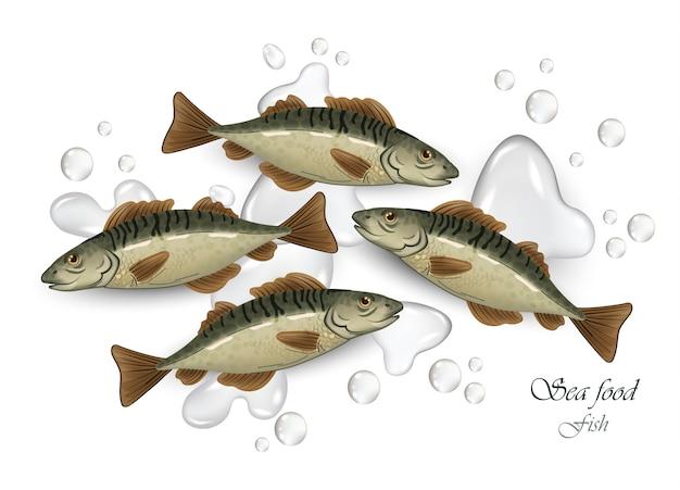 Mackerel fish seafood
