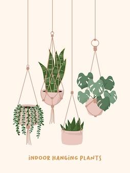 화분에서 자라는 마크라메 옷걸이 식물. 진주 뱀 알로에 monstera 집 식물 화분의 문자열입니다.