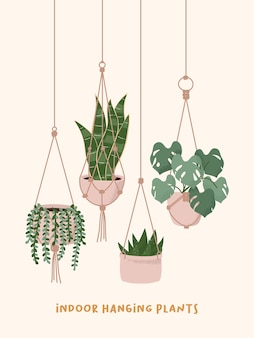 Macrame hangers plants growing in pots. string of pearls snake aloe monstera house plant flower pot. Premium Vector