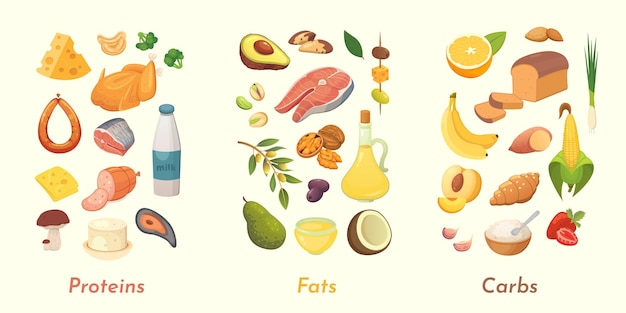 다량 영양소 그림. 주요 식품군 : 단백질, 지방 및 탄수화물. 다이어트, 건강한 식생활 개념.