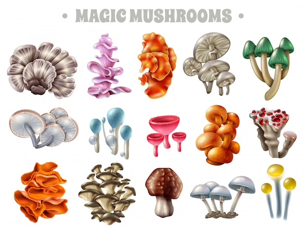 Magic mushrooms set