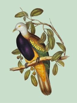 Magnificent fruit pigeon illustration