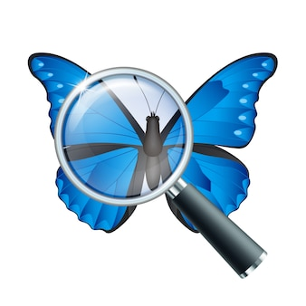 Magnifying glass and butterfly