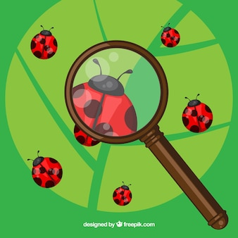 Magnifying glass with ladybugs in flat style