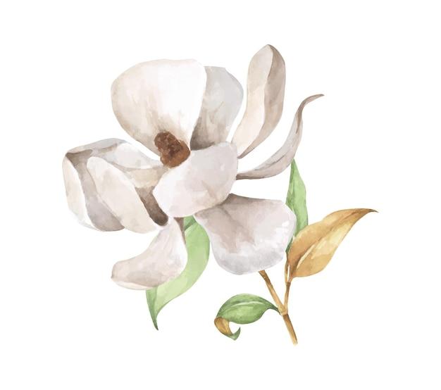 잎과 흰 꽃과 목련 지점입니다. 수채화 그림.