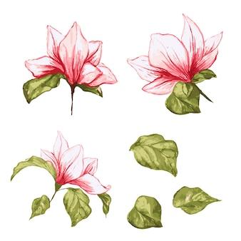 マグノリアの花のコレクション。孤立した現実的な葉と花の水彩画