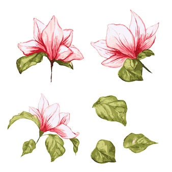 Magnolia flower collection. isolated realistic leafs and flowers on watercolor