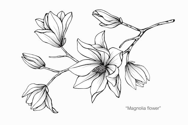 Иллюстрация рисования цветок магнолии