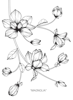 Magnolia flower drawing illustration