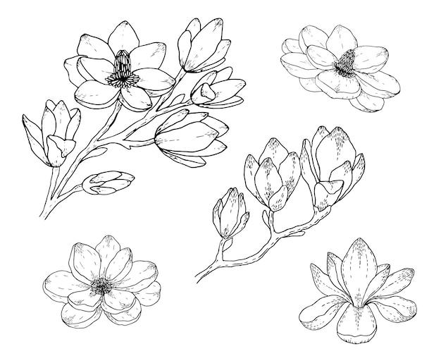 Магнолия цветочные рисунки. черное и белое с линией арт. рисованной ботанические иллюстрации.