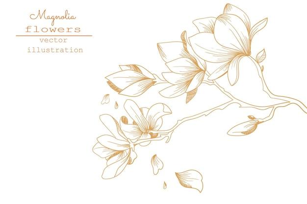 マグノリアの花の絵。花の植物学コレクションをスケッチします。手描きの植物画。ベクトル。
