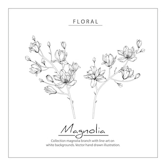 Magnolia flower drawings. Vintage Hand drawn Botanical Illustrations.