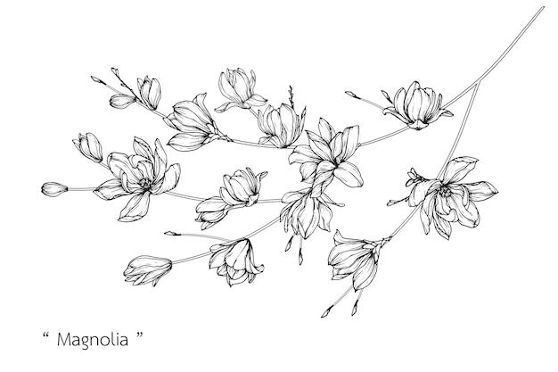 Цветочные розы магнолии. винтаж рисованной ботанические иллюстрации.