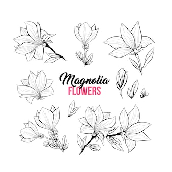 Illustrazioni disegnate a mano dei fiori della magnolia messe